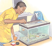 Boy feeding fish in fish tank.